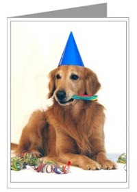 Golden retriever gifts greeting cards notecards golden retriever birthday card m4hsunfo