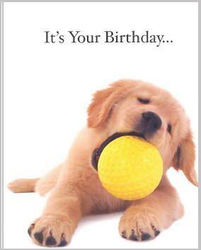 http://www.golden.retriever-gifts.com/cards/golden_retriever_puppy_1.jpg