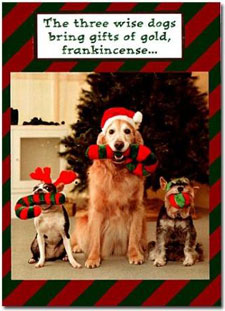 News LOL TV: Funny dog christmas cards