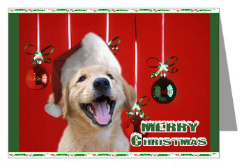 golden retriever puppy christmas golden retriever puppy christmas cards